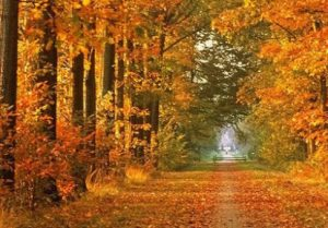 cropped-autumn-leaves-001